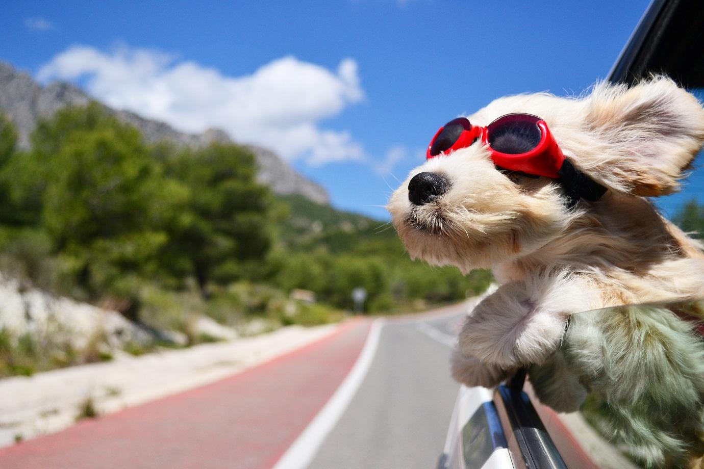 【夏の日帰り旅・サイクリングなど】3密回避の夏旅企画案募集!『まっぷるトラベルガイド』 | SAGOJO(サゴジョー)